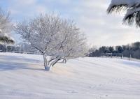 Также в этот день принято было стряхивать снег с яблонь (Фото: Andrea J Smith, Shutterstock)