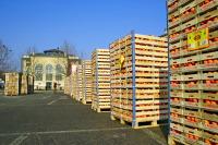 Снаряды-апельсины подготовлены к битве (Фото: Pecold, Shutterstock)
