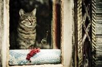 Говорили, что кошка – это хозяйка дома (Фото: gillmar, Shutterstock)