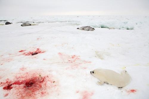 Убийство происходит весьма жестоко... (Фото: Vladimir Melnik, Shutterstock)