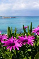 Праздник цветов посвящен именно тем растениям, которые произрастают на Кипре (Фото: NAS CRETIVES, Shutterstock)