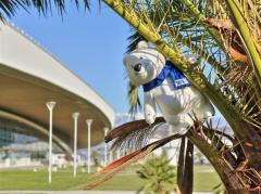XXII Олимпийские Игры в Сочи — факты и цифры