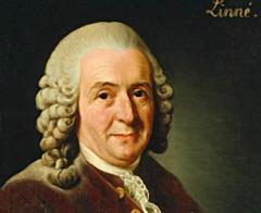 Портрет Карл Линней (Портрет работы А.Рослина, 1775)